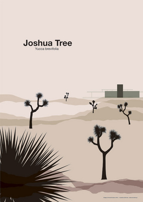joshua_tree_main.jpg